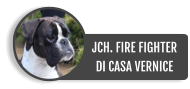JCH. FIRE FIGHTERDI CASA VERNICE